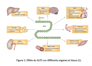 Glp-1 figure 1